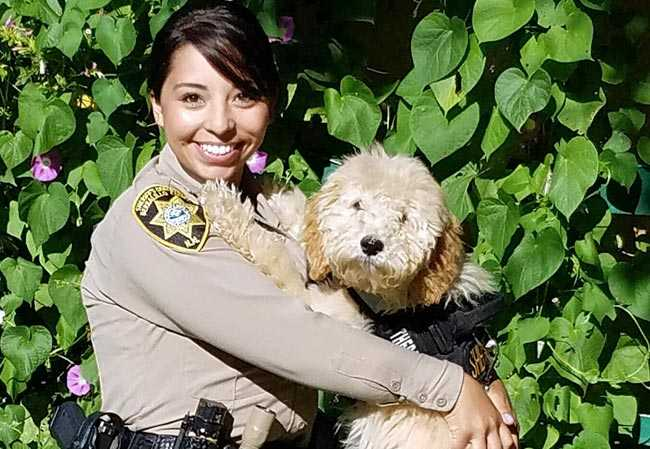 """Penny"" Australian Labradoodle working for the Bernalillo County Sheriff's department"
